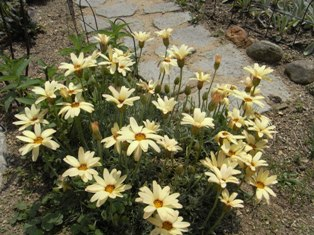 0503_flower03.JPG